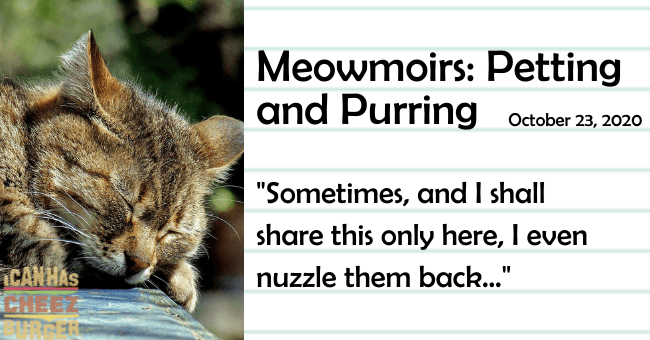 "the third entry of meowmoirs diary of a cat about petting and purring thumbnail includes a picture of a relaxed cat the name of the entry and a quote from it 'Cat - Meowmoirs: Petting and Purring October 23, 2020 ""Sometimes, and I shall share this only here, I even CANHAS CHEEZ RGER nuzzle them back..""'"