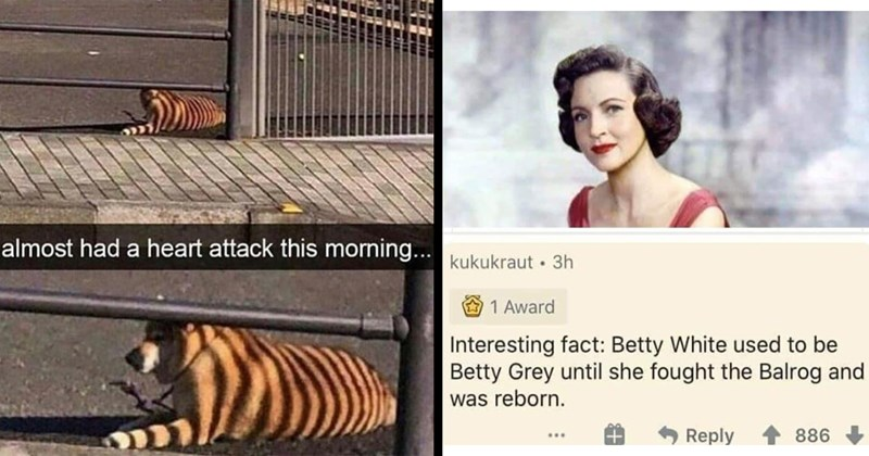 Dank Memes, Random Memes, Funny Memes, Spicy Memes, Relatable Memes, Nerdy Memes | almost had heart attack this morning dog with stripes of shadow falling on its fur looking like a tiger | kukukraut 3h 1 Award Interesting fact: Betty White used be Betty Grey until she fought Balrog and reborn.