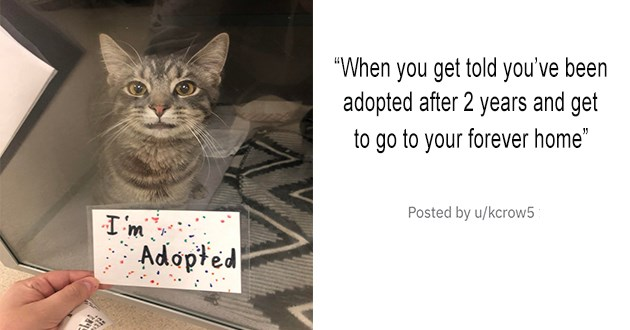 """all the newly adopted rescue animals of the week - thumbnail of senior cat """"Chloe is 9 years old, I adopted her today . I called and asked who had been there the longest? Now she queen of the castle"""""""