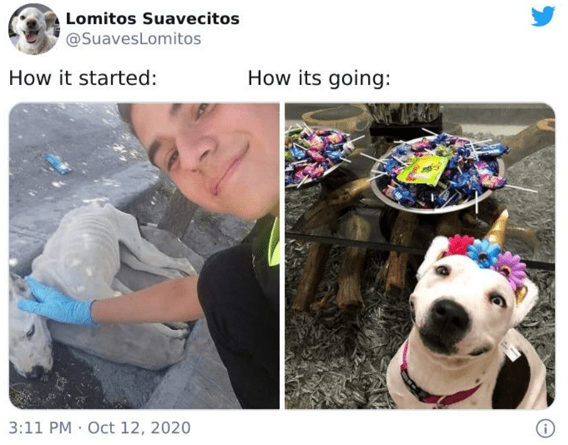 "trending twitter challenge ""how it started vs how its going"" features wholesome rescued animals - thumbnail of malnourished dog and then happy dog in a birthday hat"
