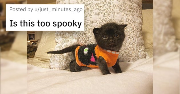 "pictures of black cats - thumbnail of tiny black kitten in a sweater ""is this too spooky"""