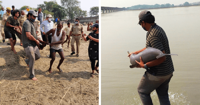 story about a stranded dolphin who was rescued and released back into the wild in India thumbnail includes two pictures including people carrying the dolphin on a stretcher together and another of a man holding the dolphin about to release it into the river