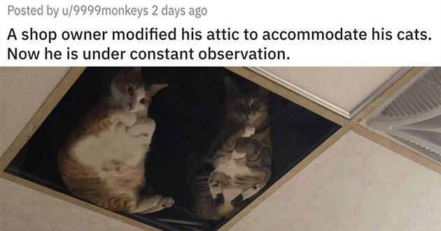 "pics and vids of the cutest animals of the week - thumbnail of two cats in the ceiling looking down ""A shop owner modified his attic to accommodate his cats. Now he is under constant observation."""