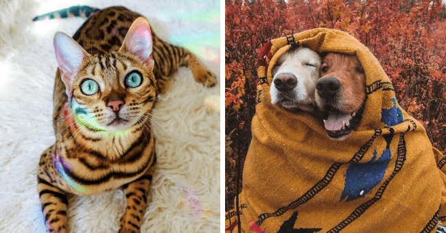 collection of pictures worth 1000 words thumbnail includes two pictures including one of a bengal cat with a rainbow on it and another of two dogs cuddled under a blanket together
