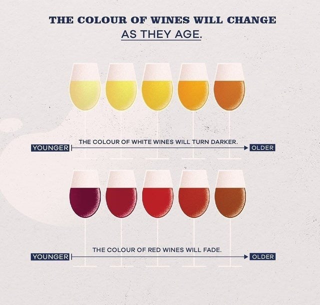 top weekly infographics guides of the week | Drink - COLOUR WINES WILL CHANGE AS THEY AGE COLOUR WHITE WINES WILL TURN DARKER. YOUNGER OLDER COLOUR RED WINES WILL FADE. YOUNGER OLDER