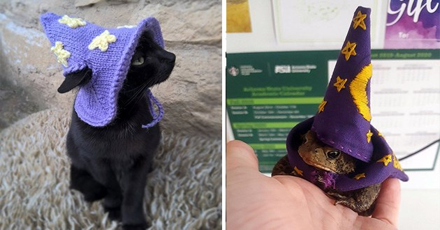 list of animals wearing wizard hats - thumbnail of a cat wearing a wizard hat and a frog wearing a wizard hat