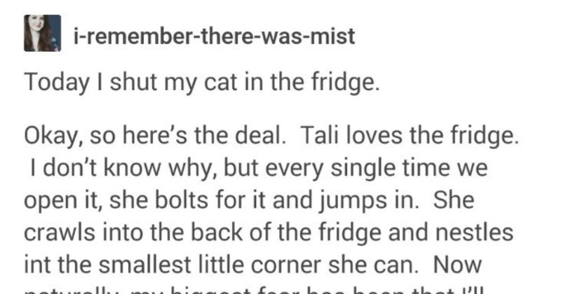 A funny Tumblr thread about a strange cat | remember-there--mist Today shut my cat fridge. Okay, so here's deal. Tali loves fridge don't know why, but every single time open she bolts and jumps She crawls into back fridge and nestles int smallest little corner she can. Now naturally, my biggest fear has been l'll close fridge without knowing she's there. And course, today went go grab my Brita filter pour myself some water wasn't really watching fridge, and just opened and closed really quickly