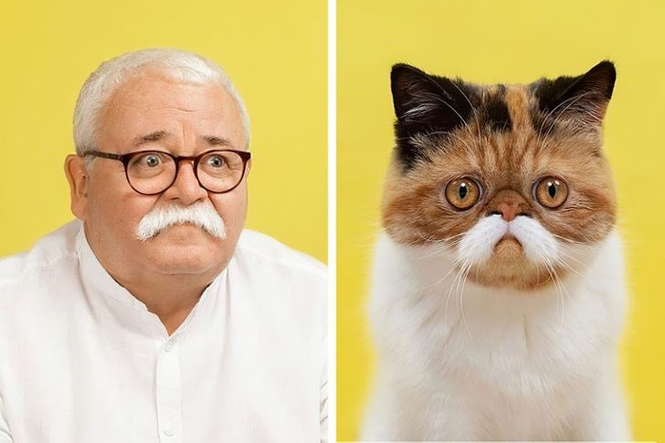 photographer highlight comparisons of how human and their pets tend to look alike in portraits - thumbnail of older gentleman and his cat who looks just like him