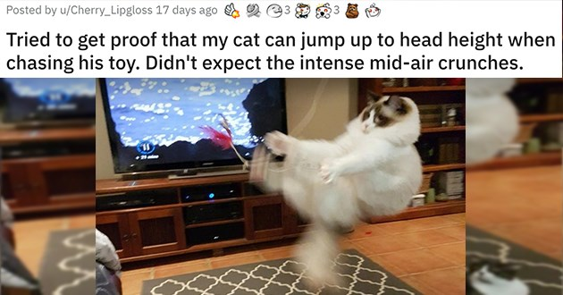 "cats being their entertaining selves - thumbnail of cat jumping through the air ""Tried to get proof that my cat can jump up to head height when chasing his toy. Didn't expect the intense mid-air crunches."""