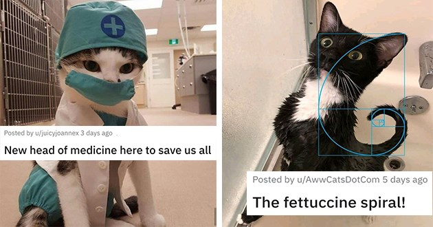 "cat medley filled with cuteness, laughs, wholesome cat pics and mourning and loss - thumbnail includes two cat images one of a cat dressed as a doctor ""new head of medicine here to save us all"" and one of tuxedo cat ""the fettuccine spiral!"""