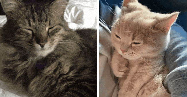 gifs of cats and kittens slow blinking thumbnail includes two pictures including one of a kitten slow blinking and another of a cat slow blinking