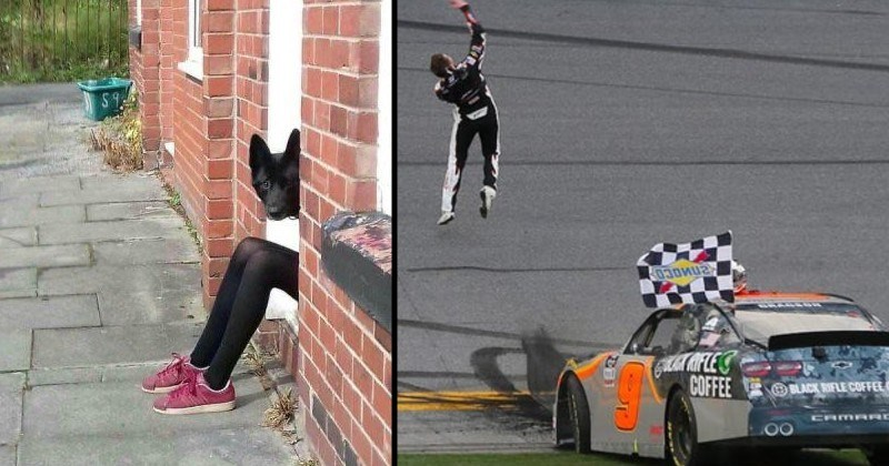 interesting optical illusions | dog head peeking from behind a wall next to a pair of human legs | driver running out of a race car looking as if he's floating above it