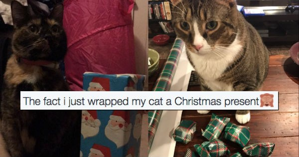 christmas,twitter,gifts,presents,Cats,funny