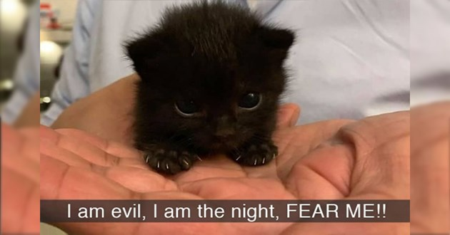 "spooky and adorable cat snaps - thumbnail of tiny black kitten ""I am evil, I am the night, FEAR ME!"""