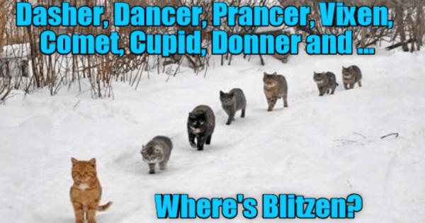lolcats christmas Memes caption Cats holidays