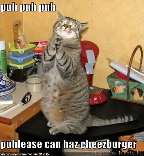 Cheezburger Image 1283476224