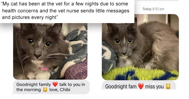 "list of all things cats, from funny to cute - thumbnail of text screenshots of a cat at the vet, ""My cat has been at the vet for a few nights due to some health concerns and the vet nurse sends little messages and pictures every night"""