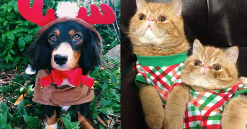 costume christmas dogs pets festival dressed up Cats holidays - 1283589