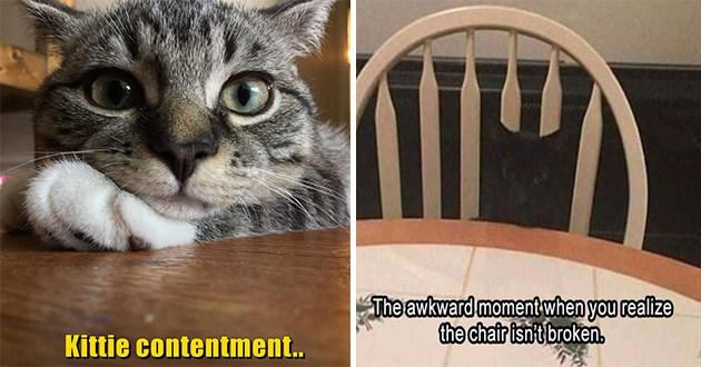 "original cat memes by i can has cheezburger users lolcats - thumbnail includes two cat memes one of a smiling happy cat""kittie contentment"" and a black cat sitting in a chair""that awkward moment when you realize the chair isn't broken"""