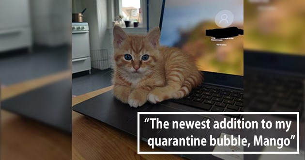 "all the newly adopted rescue animals of the week - thumbnail of tiny orange kitten ""The newest addition to my quarantine bubble, Mango"""