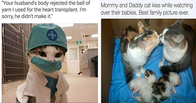 fresh cat memes every caturday - thumbnail includes two memes one of a doctor cat and one of a family of cats | husband's body rejected ball yarn used heart transplant sorry, he didn't make | Mommy and Daddy cat kiss while watching over their babies. Best family picture ever.