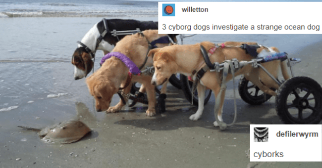 cute and funny tumblr posts about dogs thumbnail includes a picture of three dogs in handicap contraptions looking at a stingray with the captions 'Vehicle - willetton 3 cyborg dogs investigate a strange ocean dog defilerwyrm сyborks'