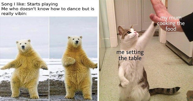 weeks best and cutest wholesome animal memes - thumbnail includes two wholesome memes one of a polar bear dancing and one of a cat high-fiving a human | Song like: Starts playing who doesn't know dance but is really vibin: | my mum cooking food setting table