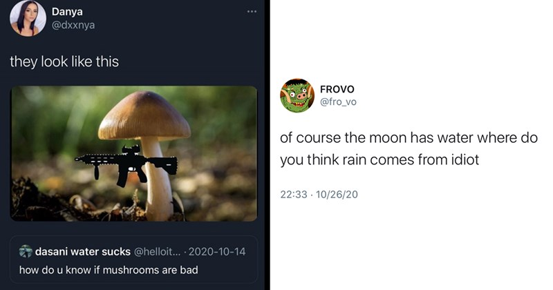 funny tweets, twitter, funny memes, social media, jokes | Danya @dxxnya they look like this dasani water sucks @helloit 2020-10-14 do u know if mushrooms are bad mushroom with a shotgun | FROVO fro_vo course moon has water where do think rain comes idiot