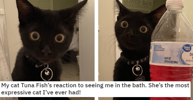 pictures of cats who look mildly startled thumbnail includes two pictures of a black kitten with its eyes wide open looking slightly surprised and the caption 'My cat Tuna Fish's reaction to seeing me in the bath. She's the most expressive cat I've ever had!' 'Cat - LOWER BAR LOWER BAR Great Value nenpet Dit 169A 0Z (1PT09FLOZ 50mL 国 Cal my mon Shegy ng In Chipped'