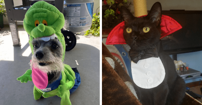 pictures of cheezburger facebook user's pets wearing their halloween costumes thumbnail includes two pictures including one of a dog wearing a dinosaur costume and a cat wearing a vampire costume