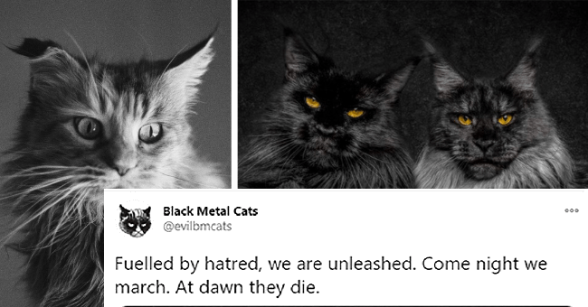 tweets from the twitter account evilbmcats or Black Metal Cats in which cat picture are matched with heavy metal lyrics thumbnail includes two pictures including one of two black and grey cats with orange eyes and another black and white picture of a fluffy cat