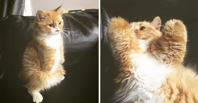 instagram spotlight star of the week is rex the t-rex cat - thumbnail includes two images