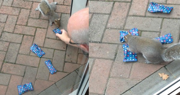 this girl's dad wrapped presents for the neighborhood squirrels and it's the cutest christmas
