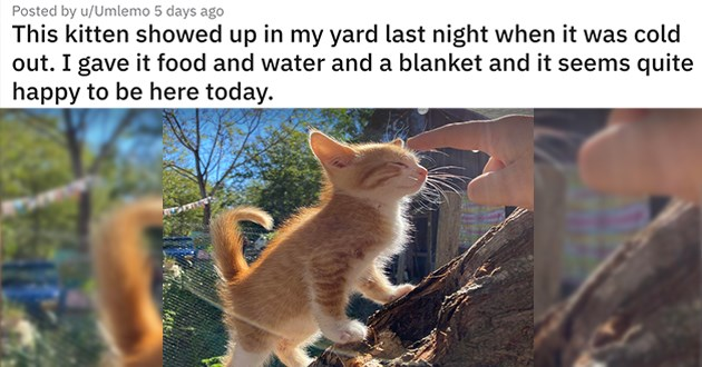 "cat medley filled with cuteness, laughs, wholesome cat pics and glow ups - thumbnail of kitten ""This kitten showed up in my yard last night when it was cold out. I gave it food and water and a blanket and it seems quite happy to be here today."""