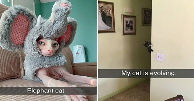 "fresh cat snapchats - thumbnail includes two cat snaps one of a cat dressed as an elephant ""elephant cat"" and one of a cat defying the laws of gravity ""my cat is evolving"""