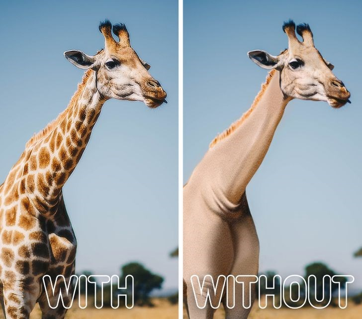 what animals would look like without their iconic markings - thumbnail of a giraffe with and without spots