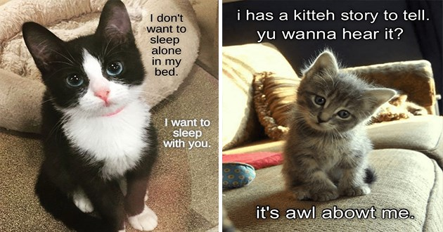 original cat memes by i can has cheezburger users lolcats - thumbnail includes two cat memes one of cat asking to sleep in the bed because it doesn't want to sleep alone and one of a kitten asking if we want to hear a hear about it | don't want sleep alone my bed want sleep with | has kitteh story tell. yu wanna hear s awl abowt