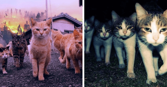 pictures of cats squads looking intimidating thumbnail includes two pictures of cats walking toward the camera looking all intimidating