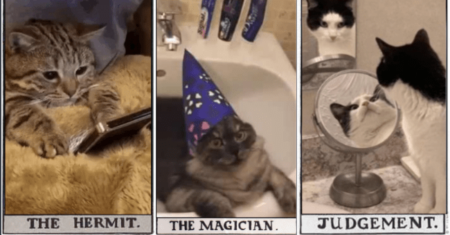 tumblr post of a tarot card deck made up of iconic cat memes thumbnail includes three images of tarot cards including one of a cat looking at a phone 'Cat - THE HERMIT.' a cat with a magician's hat on 'Cat - THE MAGICIAN. ignal.' and a cat in front of a mirror 'Cat - JUDGEMENT.'