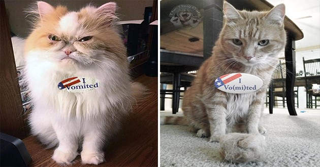 "cats who voted this election and wear the ""I vomited"" sticker - thumbnail of two cats who are wearing the ""I vomited"" sticker"