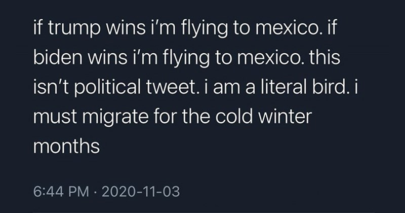 funny tweets, funny twitter, twitter, social media, memes, clever tweets, relatable, dumb jokes   tatum @50FirstTates if trump wins flying mexico. if biden wins flying mexico. this isn't political tweet am literal bird must migrate cold winter months