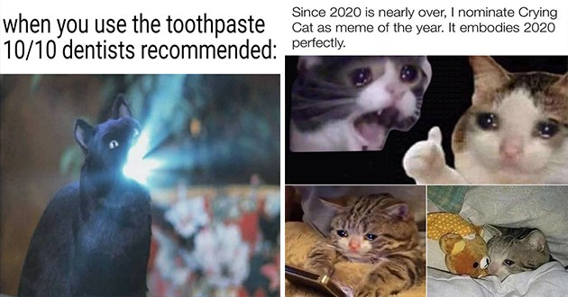 fresh cat memes every caturday - thumbnail includes two memes one of cat with impossibly bright smile and one of sad cat being dominated as cat meme of 2020 | use toothpaste 10/10 dentists recommended: | Since 2020 is nearly over nominate Crying Cat as meme year embodies 2020 perfectly. made with mematic