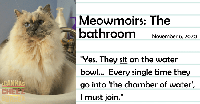 "the fifth entry of meowmoirs diary of a cat about the bathroom from the perspective of a cat thumbnail includes a picture of a cat in a sink with the name of the entry and a quote from it 'Cat - Meowmoirs: The bathroom November 6, 2020 ""Yes. They sit on the water bowl... Every single time they CANHAS CHEEZ RCER go into 'the chamber of water', I must join.""'"