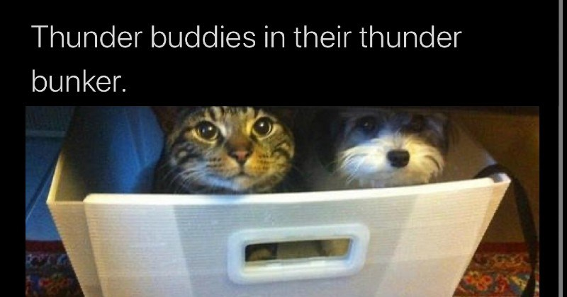 nice wholesome memes | Land cuteness @landpsychology Thunder buddies their thunder bunker. cute cat and dog hiding together in a basket