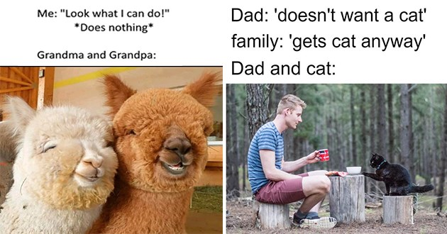 """weeks best and cutest wholesome animal memes - thumbnail includes two wholesome memes one of two smiling alpacas """"me: """"look what i can do!"""" Grandman and Grandpa:"""" and one of a man and cat haveing a tea party in the woods, """"Dad: 'doesnt want a cat' family: ' gets cat anayways' dad and cat:"""""""
