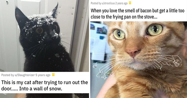 cute animals who have had a bad day - thumbnail of cat covered in snow and a cat with burnt whiskers | This is my cat after trying to run out the door..... Into a wall of snow | When you love the smell of bacon but get a little too close to the frying pan on the stove