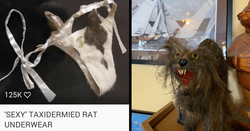 Funny cringey images of taxidermied animals, funny memes, taxidermy, stuffed animals, yikes, cringeworthy | SEXY TAXIDERMIED RAT UNDERWEAR | taxidermy animal that no longer looks like any existing animal species