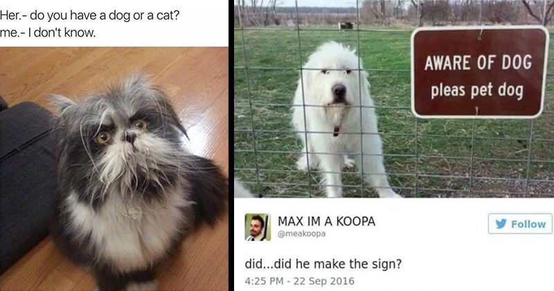 funny memes, wholesome memes, cute, animal memes, animals, dogs, cats | n2o @1evilidiot Her do have dog or cat don't know. fluffy unidentifiable creature | AWARE DOG pleas pet dog @meakoopa did did he make sign?