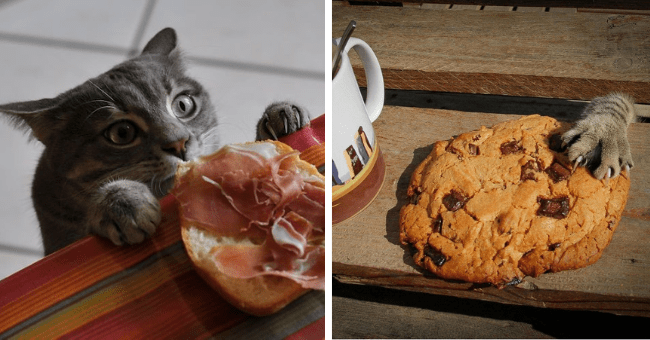 pictures of cats caught stealing humans' food thumbnail includes two pictures including a cat peeking over a table trying to grab someone's sandwich and another of a cat's paw grabbing someone's cookie