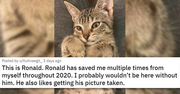 "cat medley filled with cuteness, laughs, wholesome cat pics - thumbnail of cute kitten ""This is Ronald. Ronald has saved me multiple times from myself throughout 2020. I probably wouldn't be here without him. He also likes getting his picture taken."""